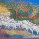 sheep-rush-drawing1
